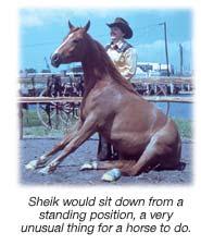 Sheik Sitting