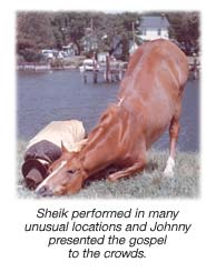 Sheik Camel