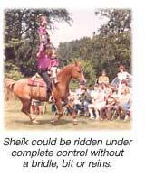 Sheik Kids